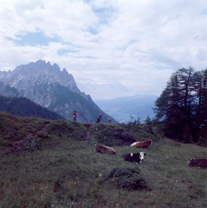 Dolomiti di Lienz - Monte Spitzkofel - Maso Kreithof - Mucche