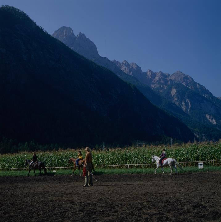Amlach - Cavalli
